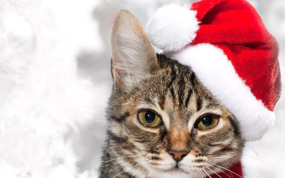 Котенок на Новый Год
